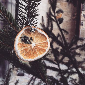 Dried orange on fir - Free image #185637