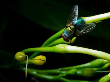 Fly on green herb - image #186127 gratis