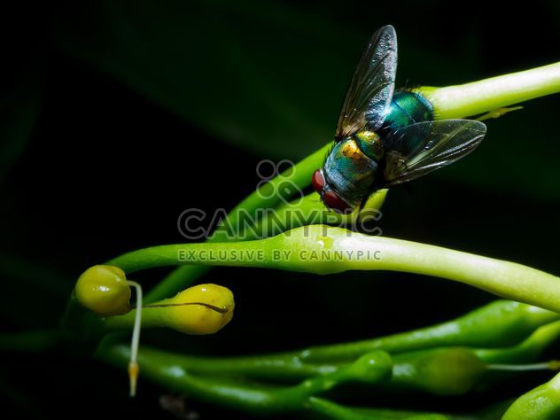 Fly on green herb - Free image #186127