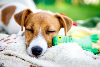 Sleeping puppy - image #186167 gratis
