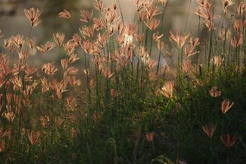 Grass in field at sunset - image #186567 gratis