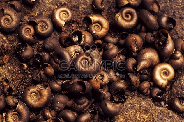 Background of brown shells - Free image #186657