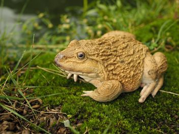 Frog on green moss - Free image #186917