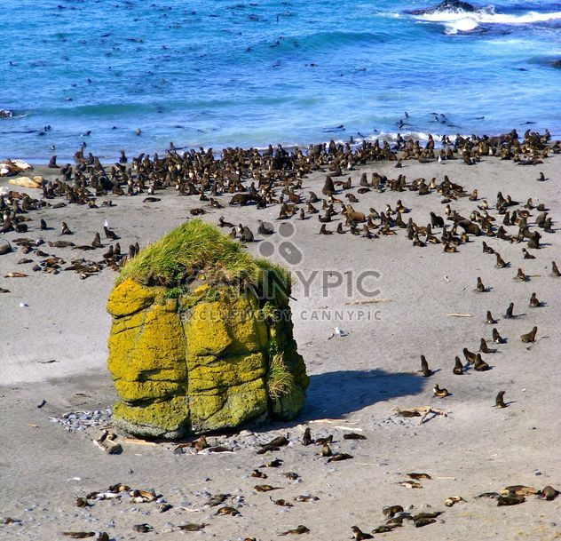 rookery of sea lions - Free image #197897