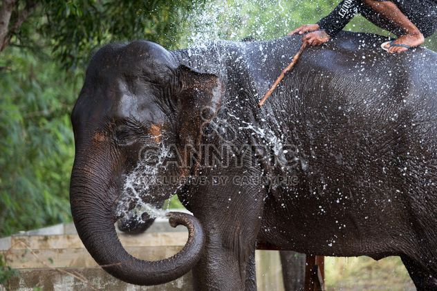 Thai elephant pours himself - Free image #198097