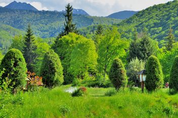 Beautiful nature in Carpathians mountains - бесплатный image #198137