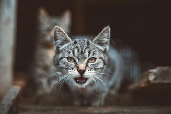 #cat #kitty #animal #animalsaddict #nature #natureaddict - image gratuit #198577
