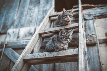 Cats on wooden ladder - image #198677 gratis