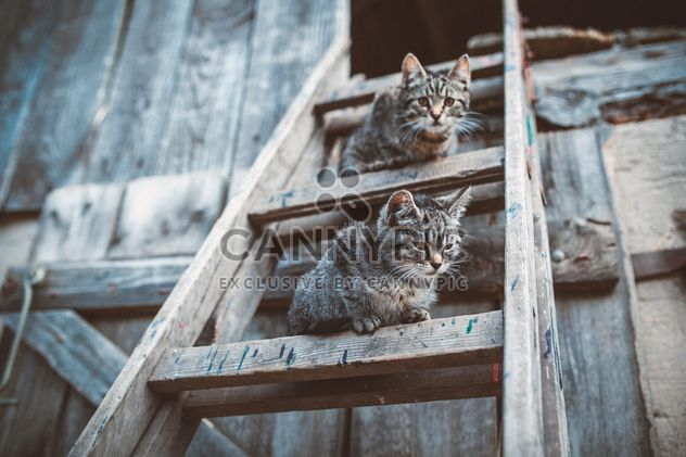 Cats on wooden ladder - Free image #198677