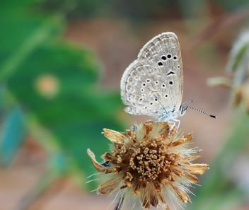 Butterfly on dry flower - image gratuit #201517