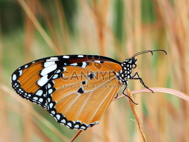 Brown butterfly - Kostenloses image #201547
