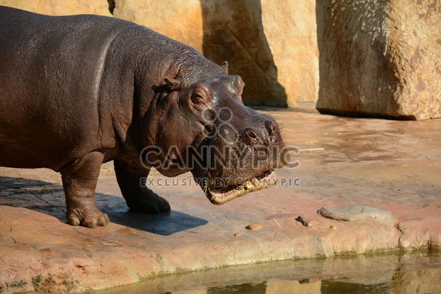 Hippo In The Zoo - image gratuit #201587
