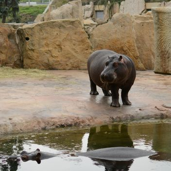 Hippo In The Zoo - Kostenloses image #201687