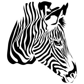 Zebra On White - Free vector #204347