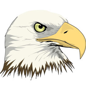 Eagle Head - vector gratuit #209797