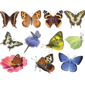 Vector Butterflies - Free vector #213527