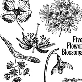 Antique Flower Blossom Illustrations - Kostenloses vector #218607