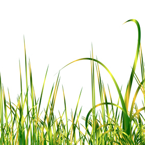 Abstract Gold Vector Grass - vector gratuit #219537