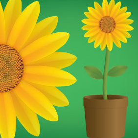 Vector Sunflower - vector gratuit #221187