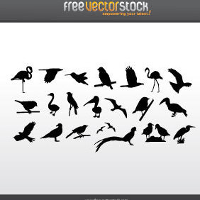 Collection Of Birds Silhouettes - vector gratuit #221737