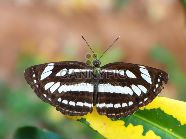 Butterfly close-up - Free image #225367