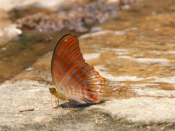 Butterfly close-up - Free image #225397