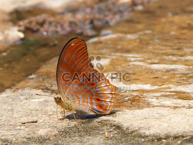 Butterfly close-up - image gratuit #225397