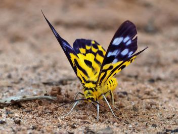 Butterfly close-up - image gratuit #225407
