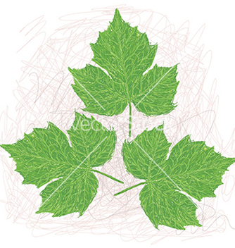 Free chaya leaves vector - Free vector #233617
