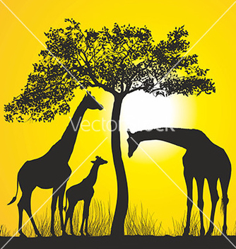 Free giraffes on the african savannah vector - Free vector #235267