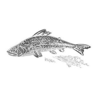 Free rainbow trout as vintage engraved vector - Kostenloses vector #236817
