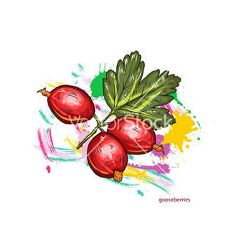Free gooseberries with colorful splashes vector - vector gratuit #243347