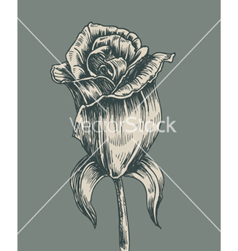 Free vintage rose vector - Free vector #263187
