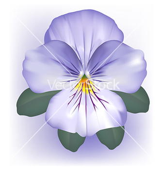 Free pansy viola flower bloom vector - Free vector #266997