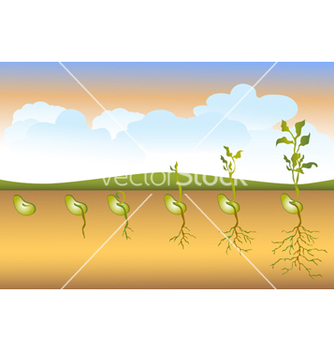 Free seed stages of growth vector - бесплатный vector #267367