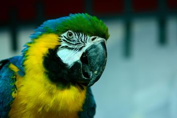 Portrait of macaw parrot - бесплатный image #271917