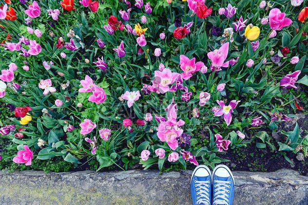 Feet in snickers near spring flowers - Free image #272347