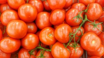 Bunch of Tomatoes - Free image #274837