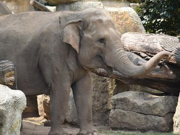 Elephant in the Zoo - image gratuit #274937