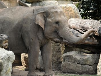 Elephant in the Zoo - image gratuit #274947