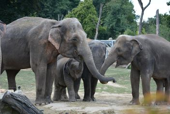 Elephants in the Zoo - Free image #274967