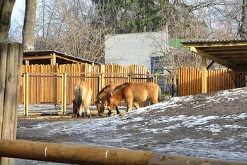 Wild horses in th Zoo - Free image #275027