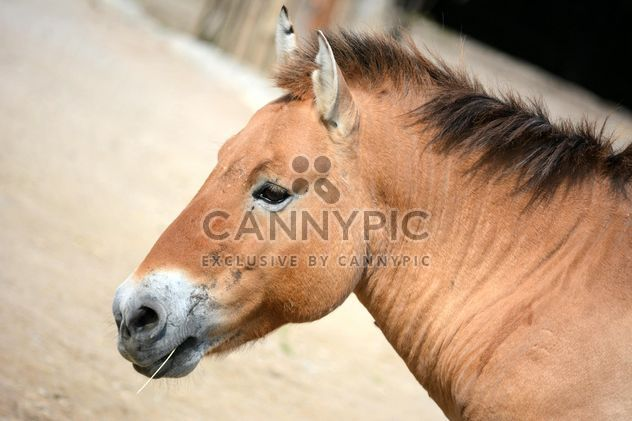 Brown horse - Free image #275057