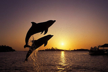 leaping_dolphins - image gratuit #275337