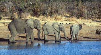 elephants - Free image #275377