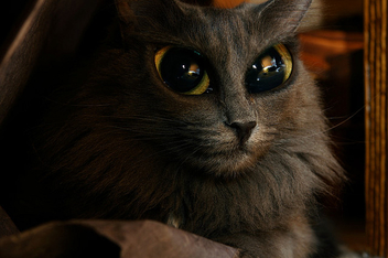 Alien Cat - image #275717 gratis
