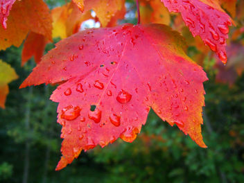After the rain - Free image #276297