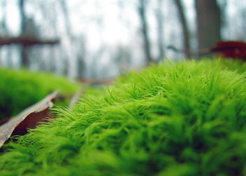 Morning Moss - image #276787 gratis