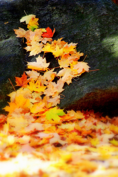Leafy path up the rock - image #277667 gratis