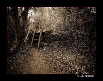 Secret Garden Steps - Free image #277907